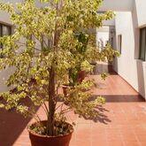 Avenida De Canarias Hotel Picture 10