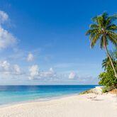 Bougainvillea Barbados Picture 17